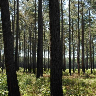 Forest and Timber Management